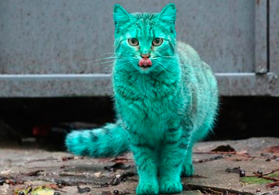 gato-verde