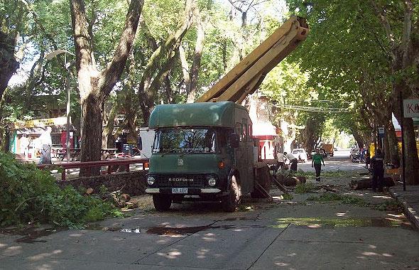 plaza-sarandi-arboles-590-5